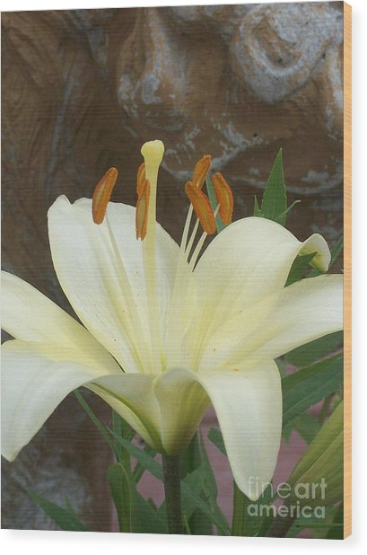 Lily And Rock Wood Print by Wide Awake Arts