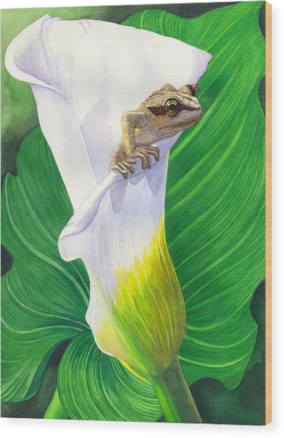 Lily Dipping Wood Print by Catherine G McElroy