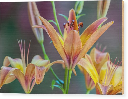 Lily From The Garden Wood Print