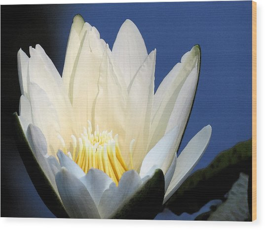 Lily In Blue Wood Print