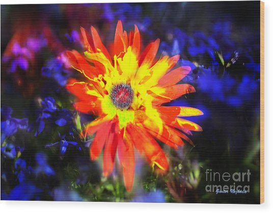 Lily In Vivd Colors Wood Print