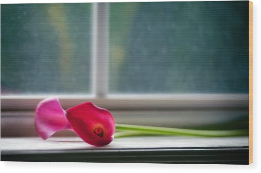 Lily In Window Wood Print by Tammy Smith
