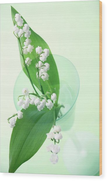Lily Of The Valley (convallaria Majalis) Wood Print