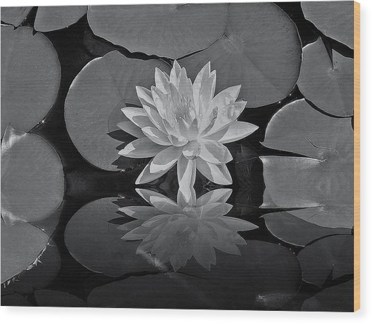 Lily On The Pond Wood Print