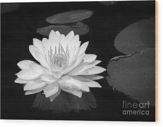 Lily On The Water Wood Print
