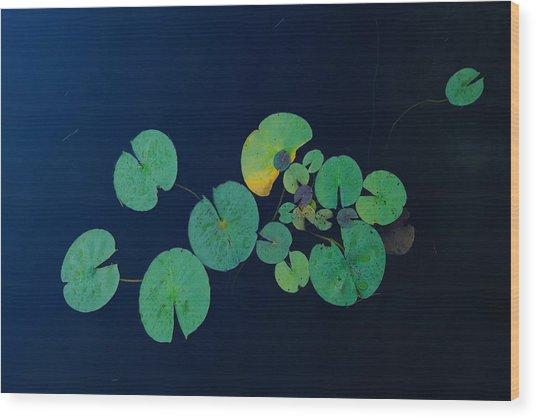 Lily Pad 2 Wood Print
