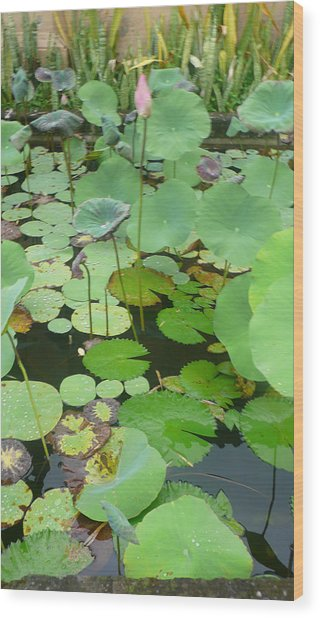 Lily Pad Wood Print by Jack Edson Adams