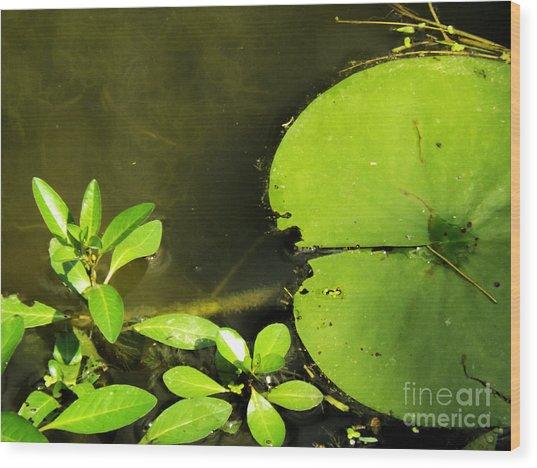 Lily Pad Wood Print