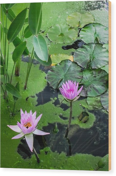 Lily Pads And Flowers Wood Print