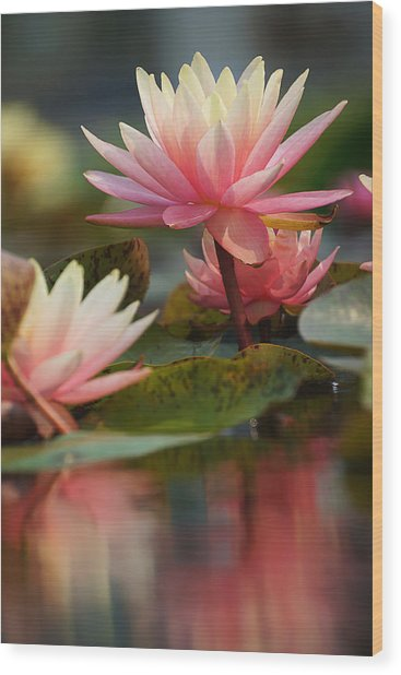 Lily Reflections 2 Wood Print