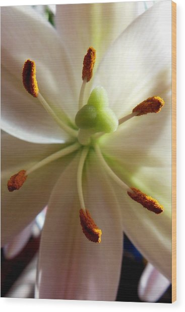 Lily Stamen Wood Print by Virginia Forbes