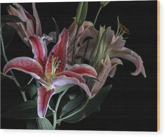 Lily The Pink Wood Print