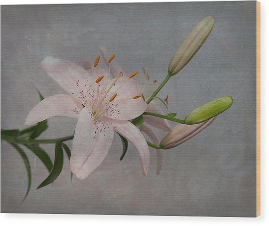 Pink Lily With Texture Wood Print