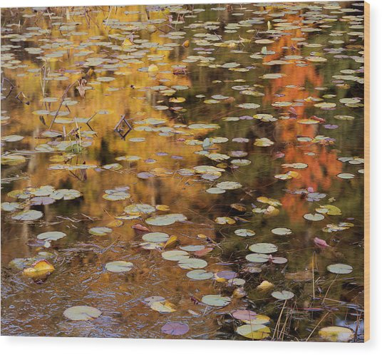 Lilypads And Reflection-h Wood Print