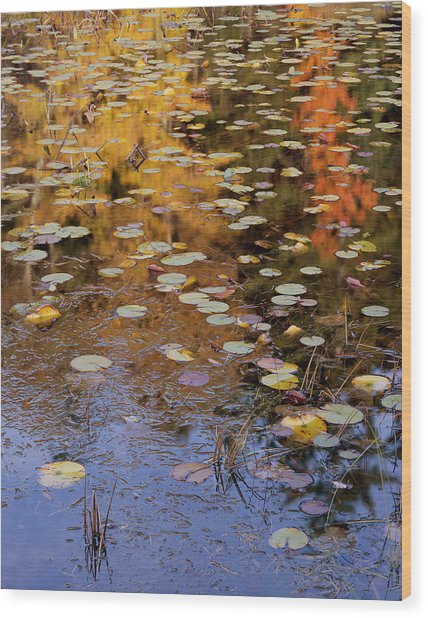 Lilypads And Reflection Wood Print