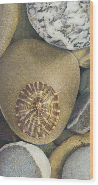 Limpet Shell Wood Print