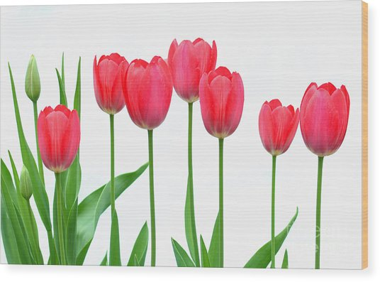 Line Of Tulips Wood Print