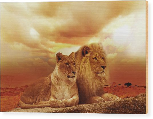 Lion Couple Without Frame Wood Print