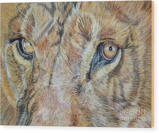 Lion Eyes Wood Print by Ann Marie Chaffin