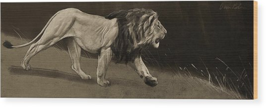 Lion Sketch Wood Print by Aaron Blaise