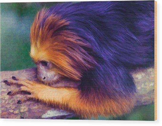 Lion Tamarin Wood Print