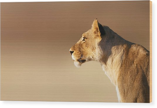 Lioness Portrait Wood Print