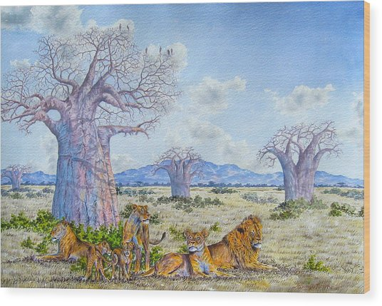 Lions By The Baobab Wood Print