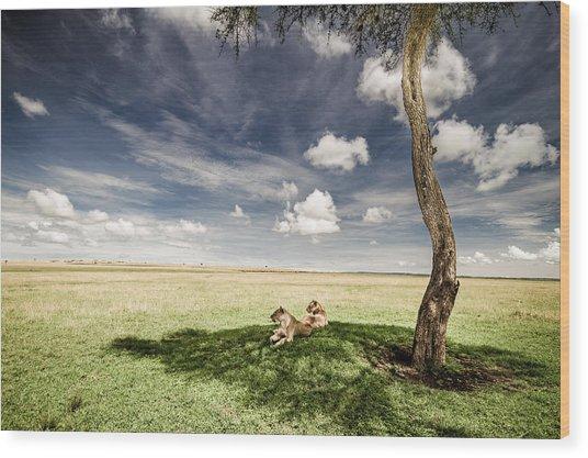 Lions In The Shade - Selenium Toned Wood Print
