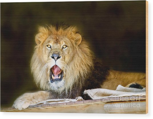 Lion's Pride Wood Print by Shannon Rogers