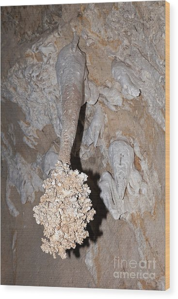 Lions Tail Carlsbad Caverns National Park Wood Print