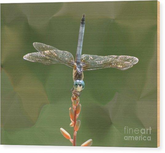 Liquify Dragonfly Wood Print