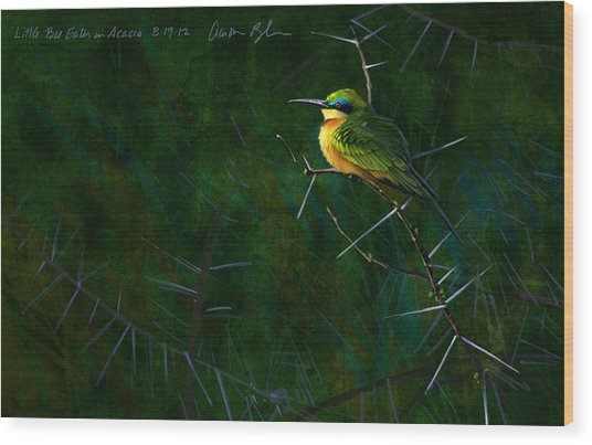 Little Bee Eater Wood Print