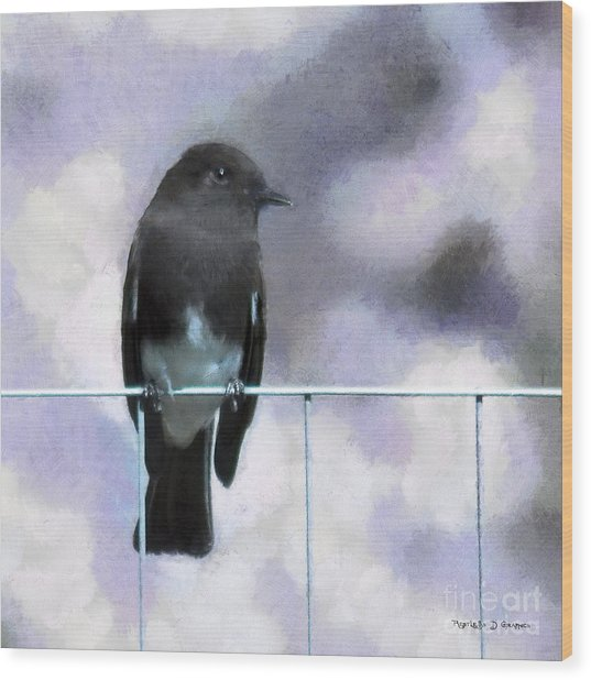 Little Black Phoebe Wood Print