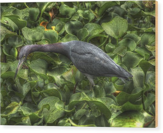 Little Blue Heron Wood Print
