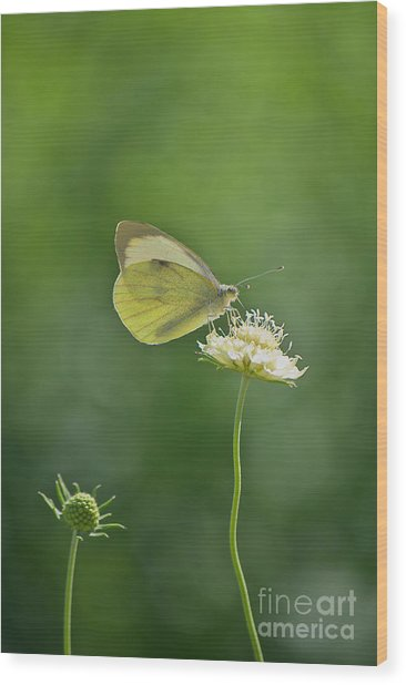 Little Butterfly Wood Print by Angela Doelling AD DESIGN Photo and PhotoArt