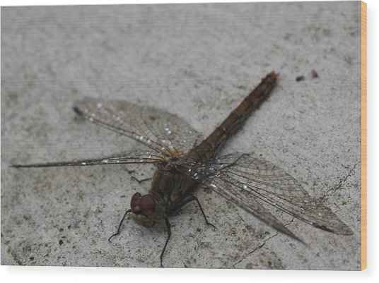 Little Dragonfly Wood Print