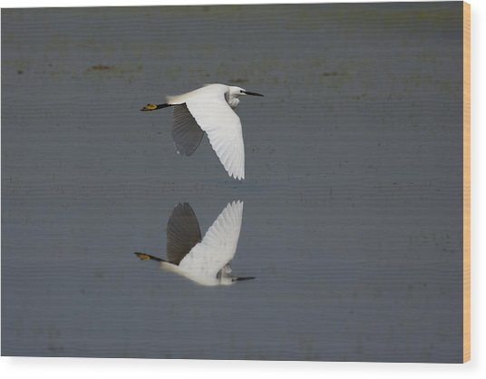 Little Egret In Flight Wood Print