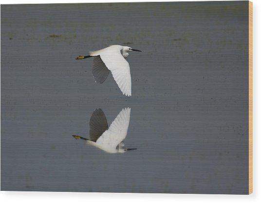 Little Egret In Flight Wood Print