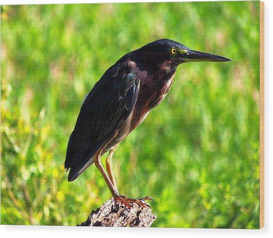 Little Green Heron 005 Wood Print by Chris Mercer