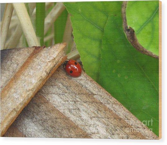Little Lazy Ladybug Wood Print