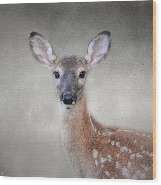 Little Miss Lashes - White Tailed Deer - Fawn Wood Print