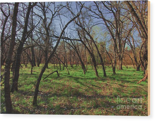 Little Oaks Wood Print by David Taylor
