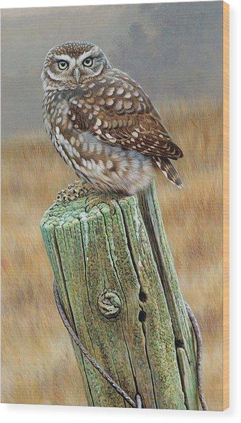 Little Owl Athene Noctua Perching On Wood Print