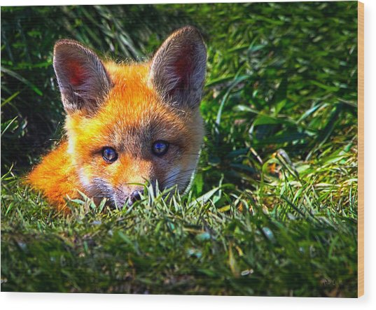 Little Red Fox Wood Print