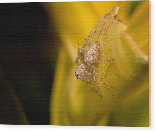 Little Spider  Wood Print