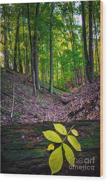 Little Valley Wood Print
