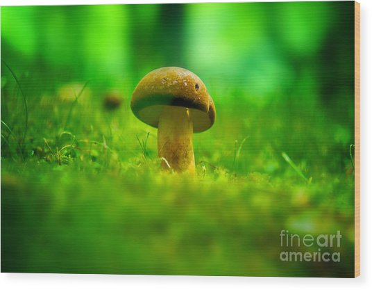 Little Wild Mushroom On A Green Forest Patch Wood Print