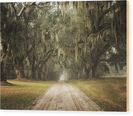 Live Oak Allee' On A Foggy Morn Wood Print