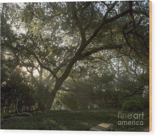 Live Oak Light Streaming Through Fog Wood Print by Kelly Morvant