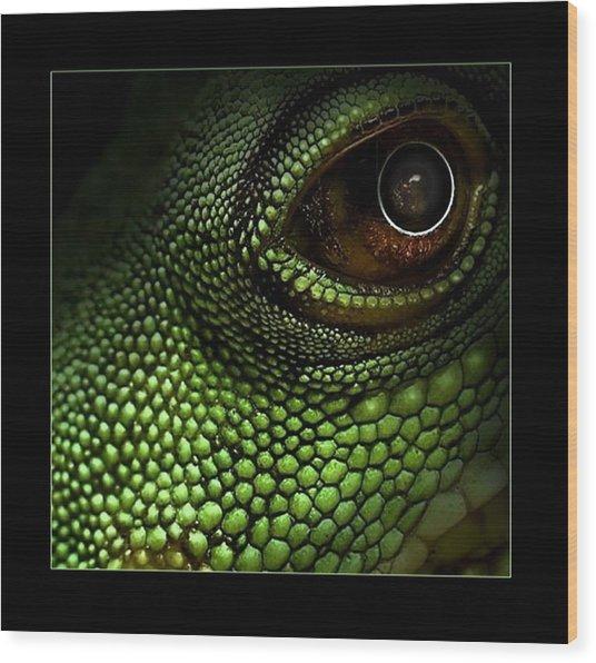 Lizard Eye Wood Print